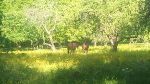 Hästrumpor på grönbete